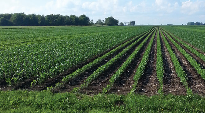 Strip-Cropping Experiments Yielding Economic, Environmental