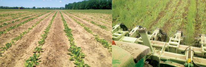 Playing the Percentages with  Precision Investments in Strip-Till