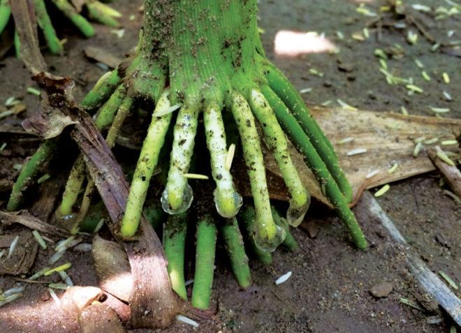 5 Soil Healing Tips to Boost Strip-Till Profitability