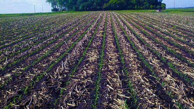 Strip-Till zones after emergence