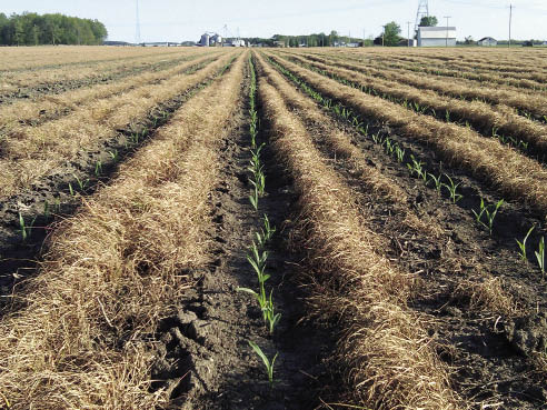 Better Seedbed