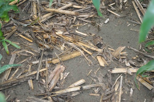 Heavy Residue. With little rainfall and low humidity in the Columbia Basin of Washington, corn stalks break down far more slowly vs. the Corn Belt, Petty says.